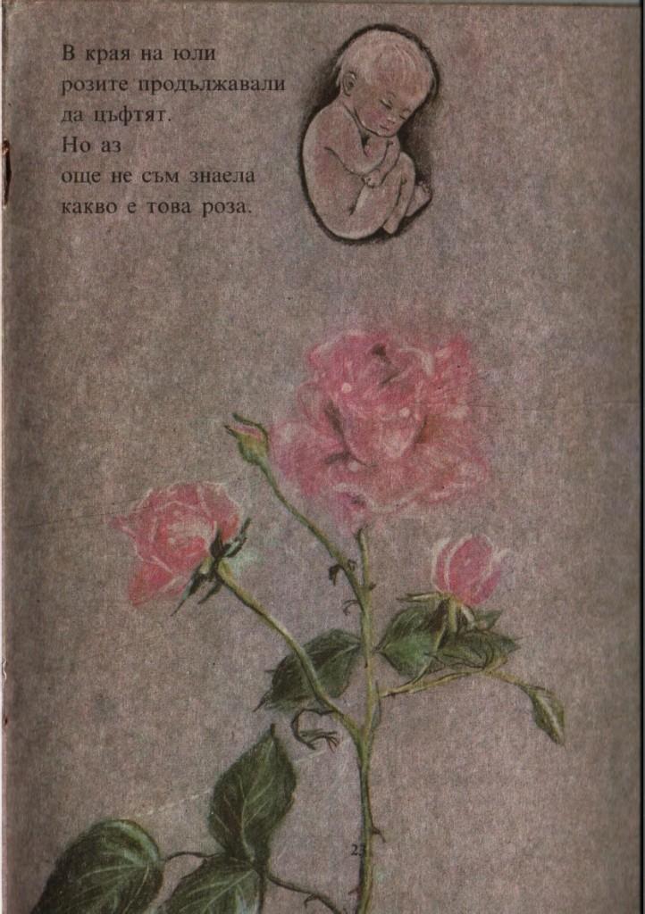 В края на юли розите продължавали да цъфтят. Но аз не съм знаела какво е това роза.